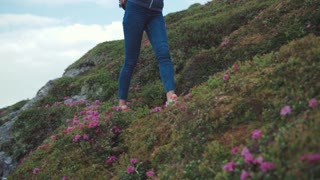 Low angle shot of a pretty young woman in casual wear, with backpack in highlands looking around amazed and going down the mountain hill covered with pink mountain flowers. Blue sky on the background.