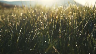 Shining morning dew on green mountain grass. Nature beauty, landscape. Feeling fresh, blooming, highlands. Slow motion, close up view, camera stabilizer shot