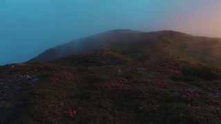 Stunning view of flowered mountain meadow at sunrise, fog around. Nature beauty, stunning landscape. Slow motion, camera stabilizer shot, scenery