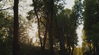 Summertime sunshine shining through the forest trees. Sun rays through the trees. Pure nature, beauty, landscape. Sun lens, sun beams