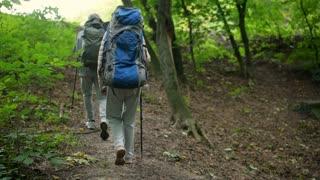 Pleasant aged couple of tourists enjoying Nordic walking