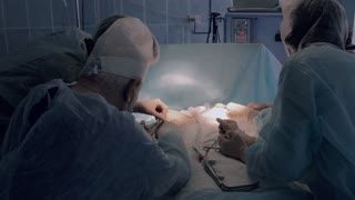 Medical team busy with reimplantation surgery