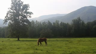 A brown horse grazes in a large green field in a scenic valley surrounded by hills at Cades Cove in the Smokey Mountains