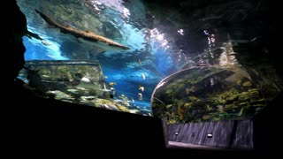 A family of three walks hand in hand through an underwater tunnel at an aquarium