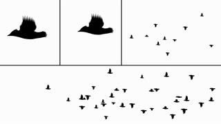 A realistic flock of birds to use in your project