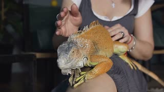 A big gecko crawls on the foot of a young girl. Portrait of a blonde girl holding a lizard. Slow motion.