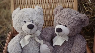 Children at sunset are playing in the field. Baby teddy bears slow motion