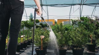 Close-up. Happy young man gardener watering garden with hose. Slow motion.