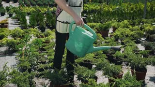 Close up of a hand holding a funnel. A boy with a beard in a garden apron pours ornamental plants with water. Garden with decorative trees on a sunny day. Slow motion