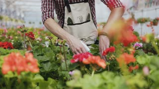 Close up of a hand holding a funnel. A man with a beard in a garden apron pours ornamental plants with water. Garden with decorative trees on a sunny day. Slow motion.