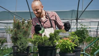 Funny gardener, perfectly dancing and caring for plants in a large greenhouse. A man in a garden apron who loves his work very much. Slow motion.