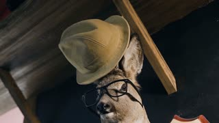 Hunter trophy - deer in the glasses and hat on the head. The deer head hanging on the wall in the indoor. Stuffed animal with antlers. Stuffed deer head, slow motion