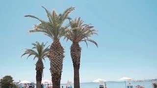 Palm trees along the coast in Port of Split,beautiful sunny day. Split slow motion