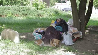 A homeless woman lying on the grass surrounded by her belongings