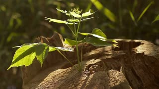 A new plant growing from an old stump, close-up