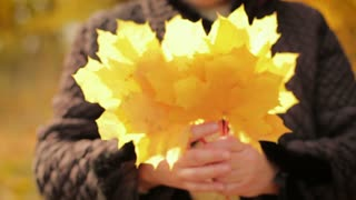 Autumn yellowed leaves in the hands of an elderly woman. Autumn theme