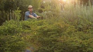 Gardener working in the garden with pruner
