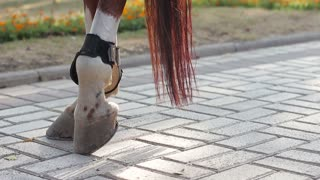 hooves of a horse on the sidewalk. close-up
