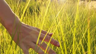 Male hand touching grass and playing with it