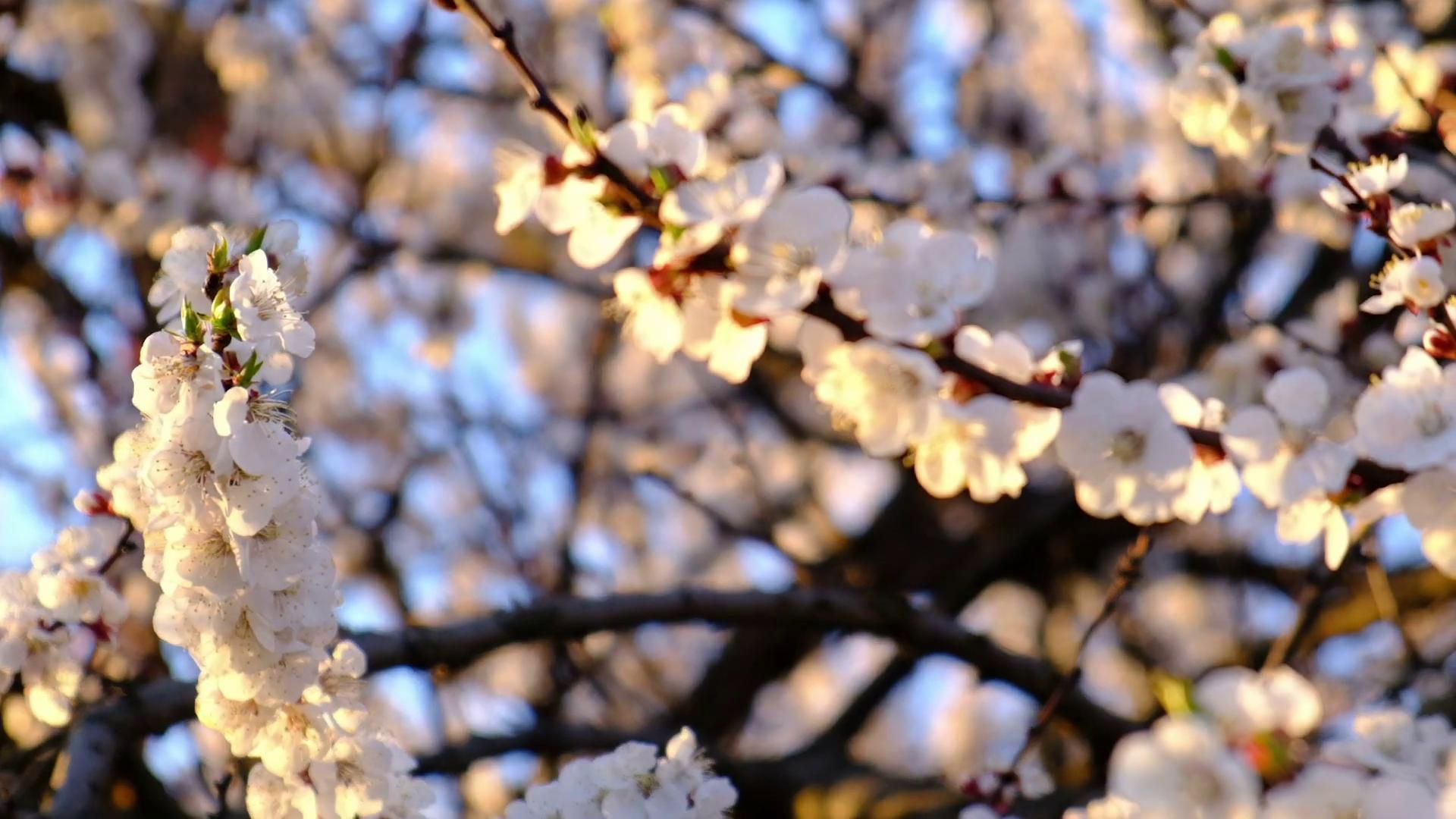 April Flowers Video