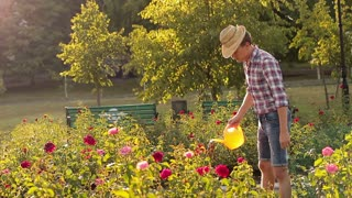 The gardener watering and caring for a flower bed of roses