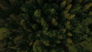 Aerial view of rain forest.