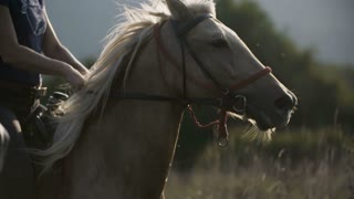Riding Horses Close Up