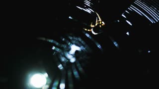Spider on a web in the dark, shined with flashlight.