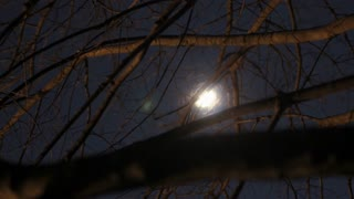 A Creepy Timelapse of the Moon moving between dead winter branches