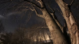 A Creepy Winter Timelapse of the Night Sky and Barren Tree