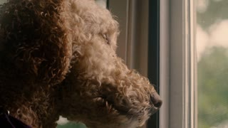 A lonely dog watches out a screen window for its owners to return home