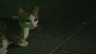A Stray Street Cat Meows on the streets of Tel-Aviv