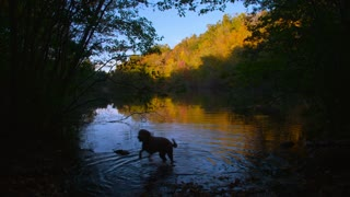 An excited dog plays fetch in a pond surrounded by fall colors