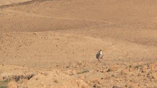 Bedouin man and Boy travel the desert on Camel