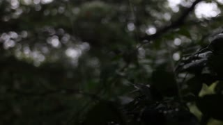 Branches are pelted by oversized raindrops in a downpour