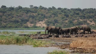 Elephants and other animals coexist along a safari riverbank