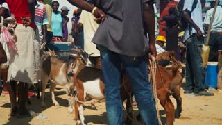 Goats at a Busy Haitian Animal Market