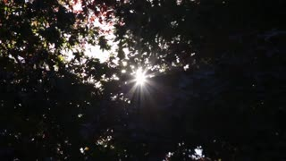 Lens flares pop through fluttering leaves creating the illusion of multiple suns