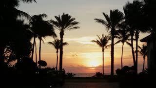 Palm Trees sway in the Ocean Sunset in Palm Beach Florida