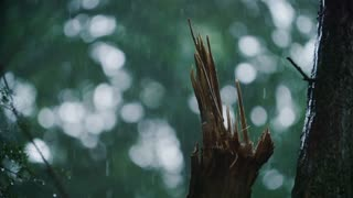 Rain falls around a broken / torn tree branch during a heavy storm 180fps
