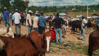 Small Horses at a Busy Haitian Animal Market