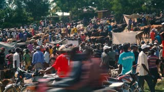 View of a Busy Haitian Animal Market