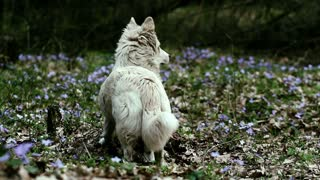 Dog hunts in the spring forest