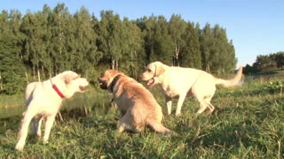 dogs have fun playing outdoors