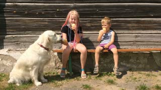 happy life of pets. funny video - beautiful golden retriever and children eating ice cream in the garden - handheld shoot