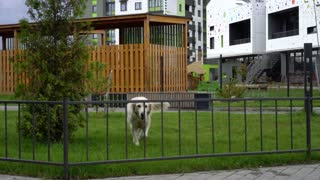 the beauty of slow motion - a dog jumping over the fence in a modern city