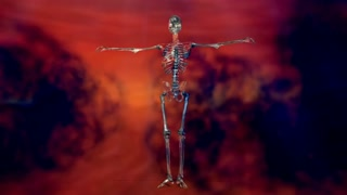Animation of a Human Skeleton