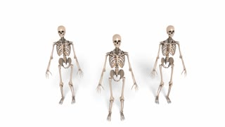Digital Animation of cheerleading Skeletons