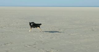 Dog playing on a North Sea Beach in Germany