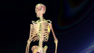 Digital 3D Animation of a human Skeleton